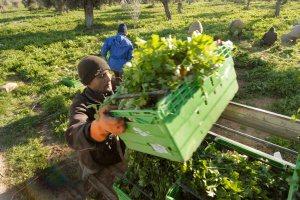 Στη συνάντηση τέθηκαν το ζήτημα της ενεργοποίησης των τεκμηρίων καθώς και το θέμα του εντύπου ΑΑ ΓΗΣ που καλούνται να συμπληρώσουν οι αγρότες